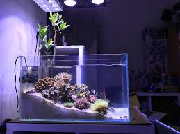 Fluval Sea Marine And Reef Led Strip Lights by Best 25 Nano Reef Tank Ideas On Pinterest Saltwater Tank