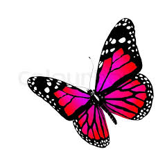 color butterfly the butterfly of crimson color stock photo