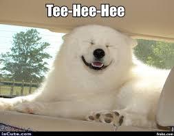 Silly Meme - silly polar bear dog meme generator captionator caption generator