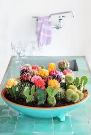 modern indoor plant ideas cactus
