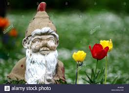 Garden Nome by Garden Gnome In The Allotment Stock Photo Royalty Free Image