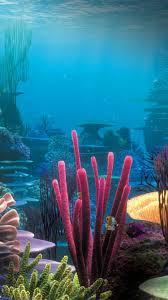 underwater iphone 6 wallpaper 7116 underwater iphone 6