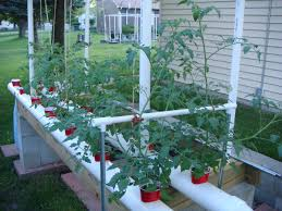 tom u0027s gardening area plant support to keep plants from being wind