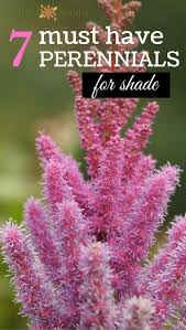 native plants for shade best 25 shade garden plants ideas on pinterest shade plants
