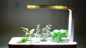 lights to grow herbs indoors easy ideas how to grow herbs indoors in pots designs green design