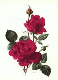 laminas y trabajos con flores flowers