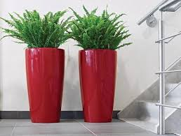 Home Decorating Plants Enhance Your Home Decor With Decorative Plants Ideas 4 Homes