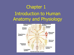 Human Anatomy And Physiology Chapter 1 Chapter 1 Introduction To Human Anatomy And Physiology Ppt Download
