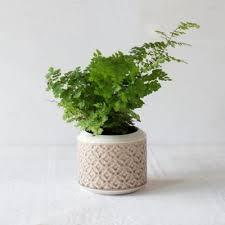 Indoor Plant Vases Indoor Planters Pots Terrain