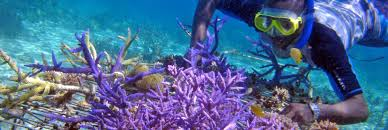 discovering life saving medicines in coral reefs kcet