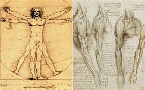 leonardo da vinci was right all along new medical scans show
