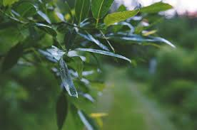 free images tree nature branch sunlight leaf flower green