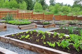 5 things to consider before planning your vegetable garden lady