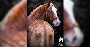 hairstyles for horses british hairstylists shave amazing patterns in horses coats