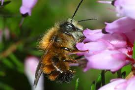 everything you need to know about solitary bees grow wild
