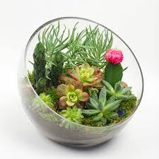 diy make your own terrarium her campus