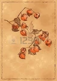 a sketch of branches with orange physalis royalty free cliparts