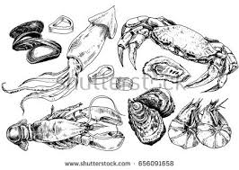 squid drawing download free vector art stock graphics u0026 images