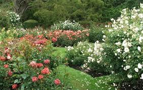 Beautiful Garden Ideas Pictures Garden Ideas Categories Wrought Iron Garden Benches Metal Mexico
