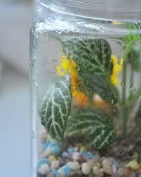 caring for your terrarium little green pot