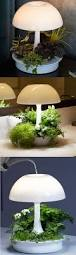indoor plants that need little light best 25 grow lights ideas on pinterest plant grow lights grow