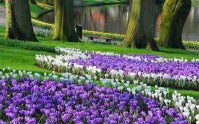 keukenhof largest garden wallpaper hd flowers pinterest
