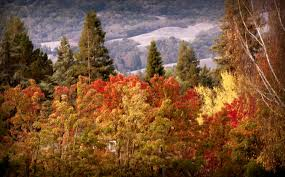 brilliant california fall foliage close u2013 marlene hutchison