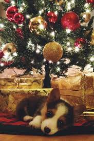 best 25 christmas puppy ideas on pinterest cute baby dogs