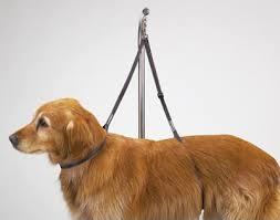 used dog grooming table dog grooming harness the best reviewed diy dog grooming help