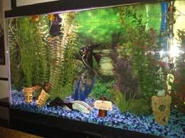 Live Plants In Community Aquariums by Selecting A Background For Your Freshwater Tank Ratemyfishtank Com