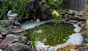 Home Garden Design Home Design - Home gardens design