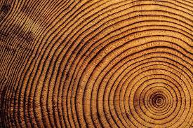 wood tree rings images Evolution tree ring dating circular reasoning christian evidence jpg