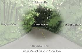 The Blind Spot In The Eye Is Due To Military Disability Ratings For Eye Conditions