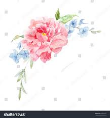Peony Flowers Watercolor Illustration Greeting Flower Card Peony Stock