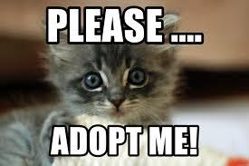 Cute Kittens Meme - please adopt me cute kittens meme generator