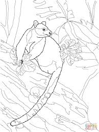 tree kangaroo coloring pages free coloring pages