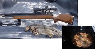 benjamin marauder vs marauding squirrels hog blog