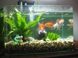 the blue door diary fish tank
