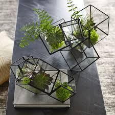 terrarium table cube terrarium west elm au