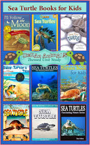 98 best turtles lesson plan ideas images on pinterest sea