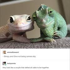 Reptile Memes - 36 memes for today 102 memes funny pictures and couples