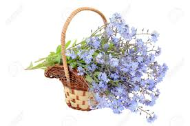 bouquet of forget me not flowers in the wicker basket on a white