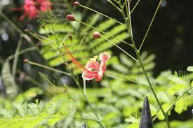 georgetown flowers flowers on waterloo georgetown guyana 14 lives