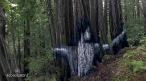 Stunning mural appears in secret forest cnn style