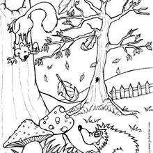 Squirrel And Hedgehog Coloring Pages Hellokids Com Forest Animals Coloring Pages