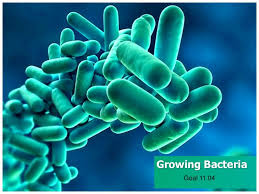 free templates for powerpoint bacteria growingbacteria 131210182845 phpapp02 thumbnail 4 jpg cb 1386701590