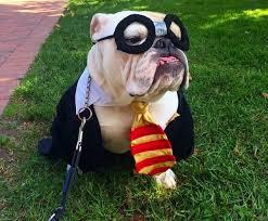 French Bulldog Costumes Halloween 10 Costumes Prove English Bulldogs Win Halloween