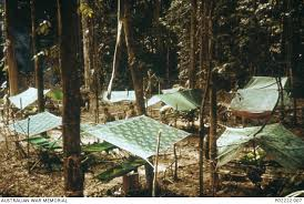 A Frame Bed Survival The Jungle Is Neutral
