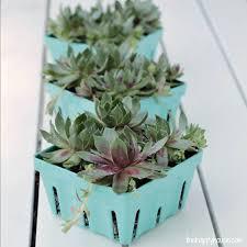 succulent planter concrete succulent planter halfway wholeistic