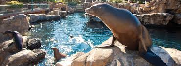 Seaworld Orlando Park Map by Pacific Point Preserve Sea Lion And Seal Habitat Seaworld Orlando